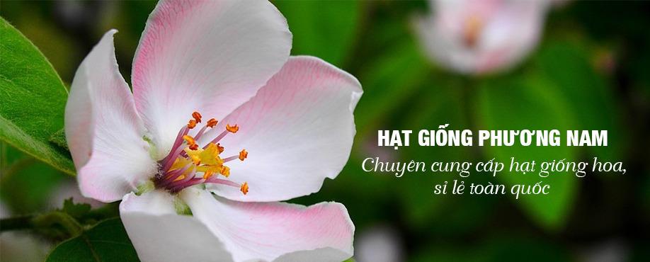 Hạt Giống Phương Nam (@hatgiongphuongnam) Cover Image
