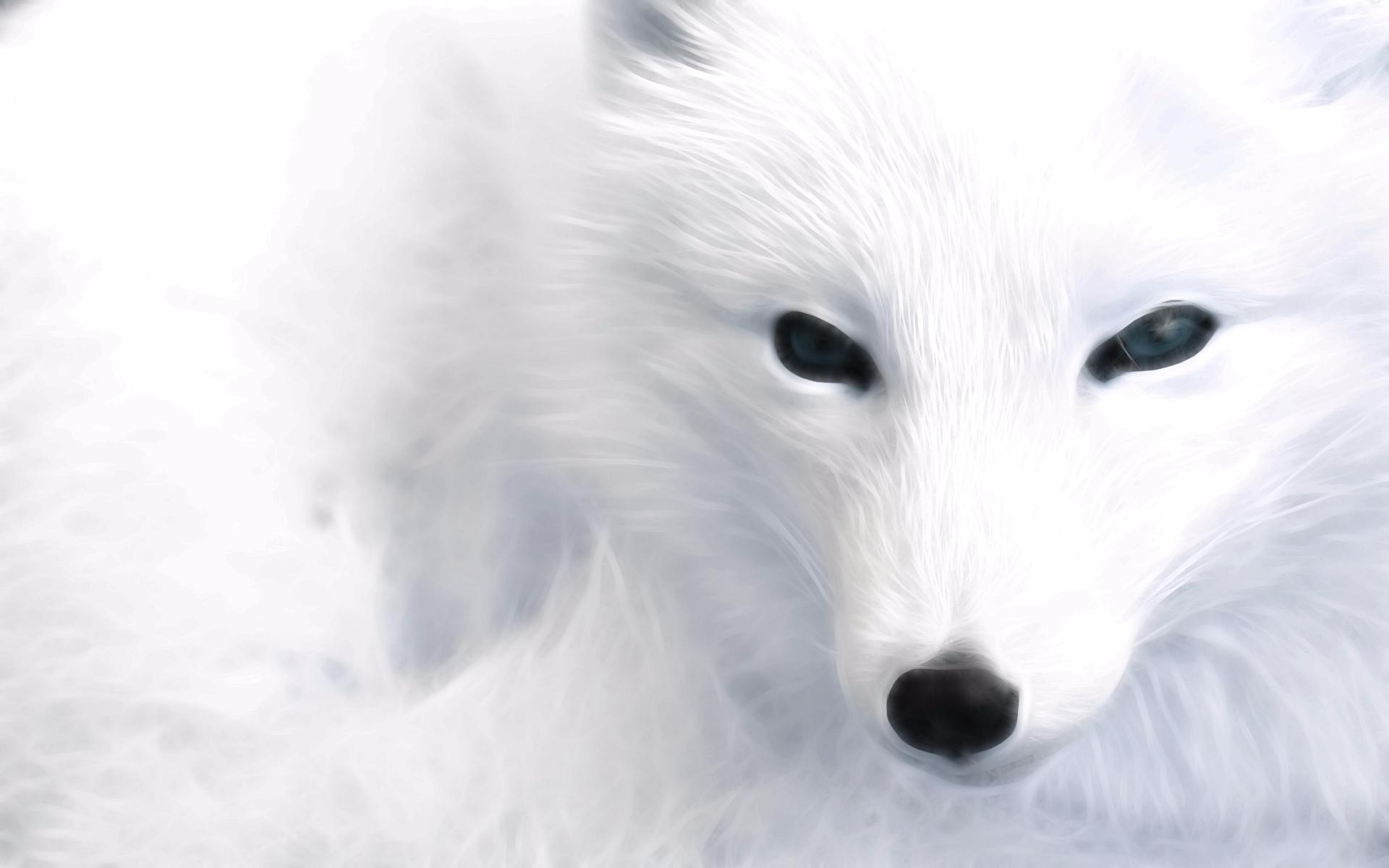 White  (@whitefoxstudios) Cover Image