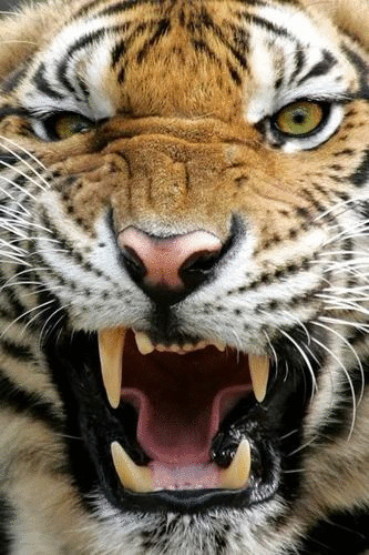 ROCKY-TIGER KING (@rocky-tiger) Cover Image