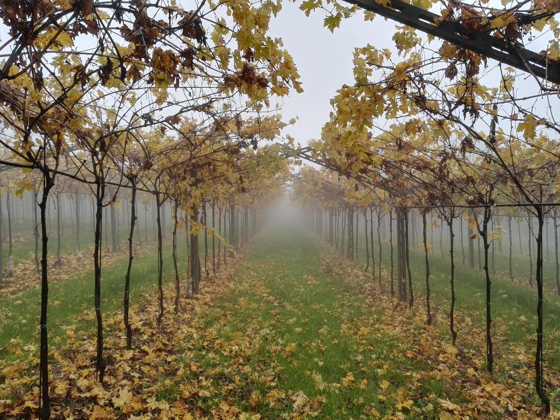 (@wineblogger) Cover Image