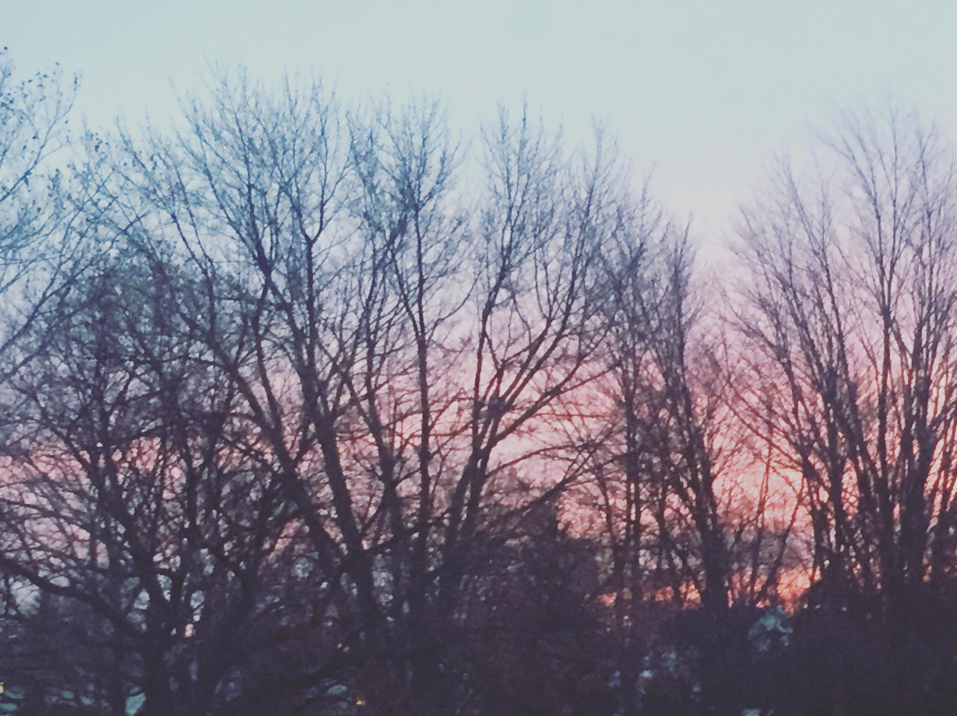 melan (@sunsetroses) Cover Image