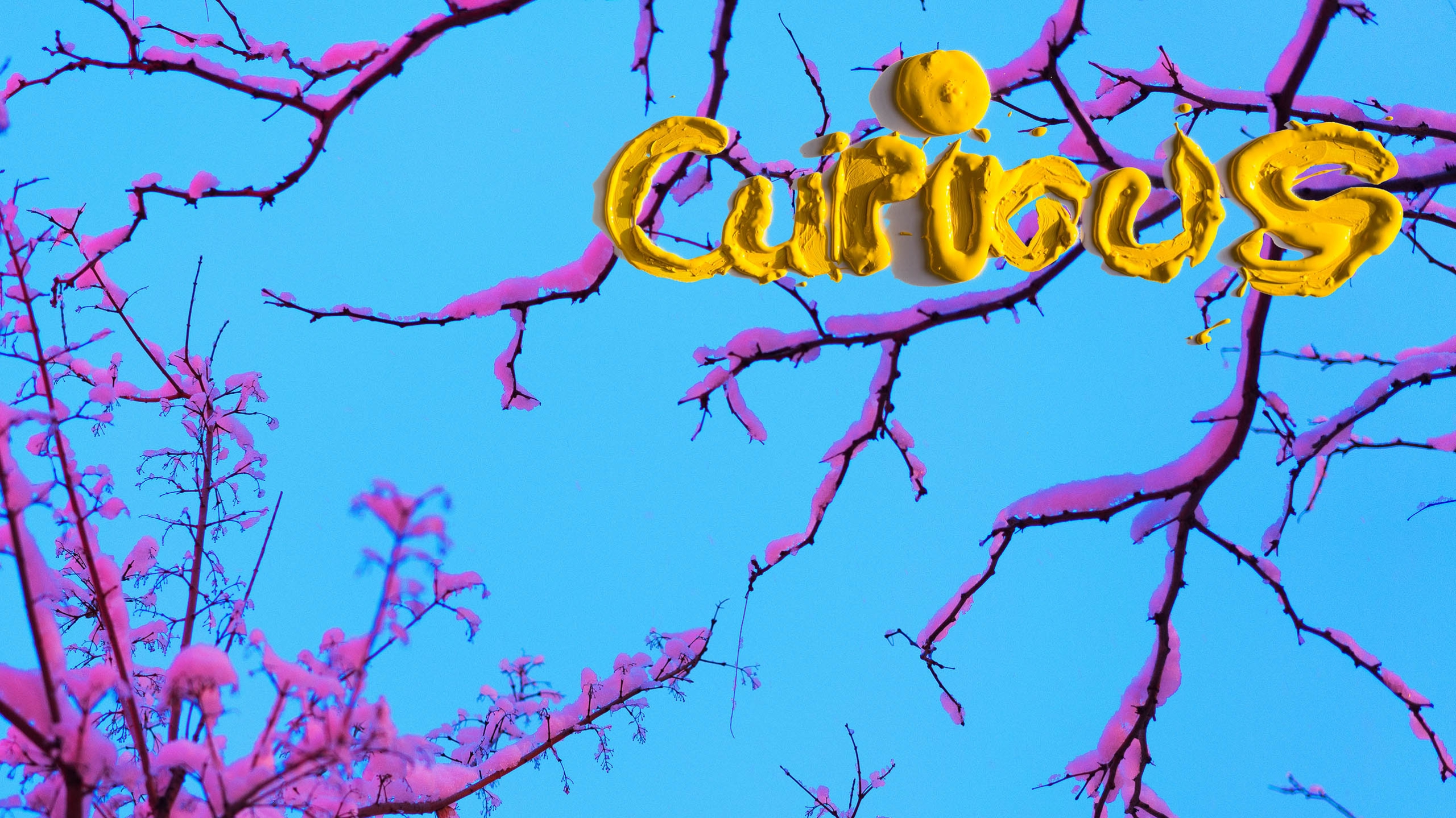 Curious  (@curiousproject) Cover Image
