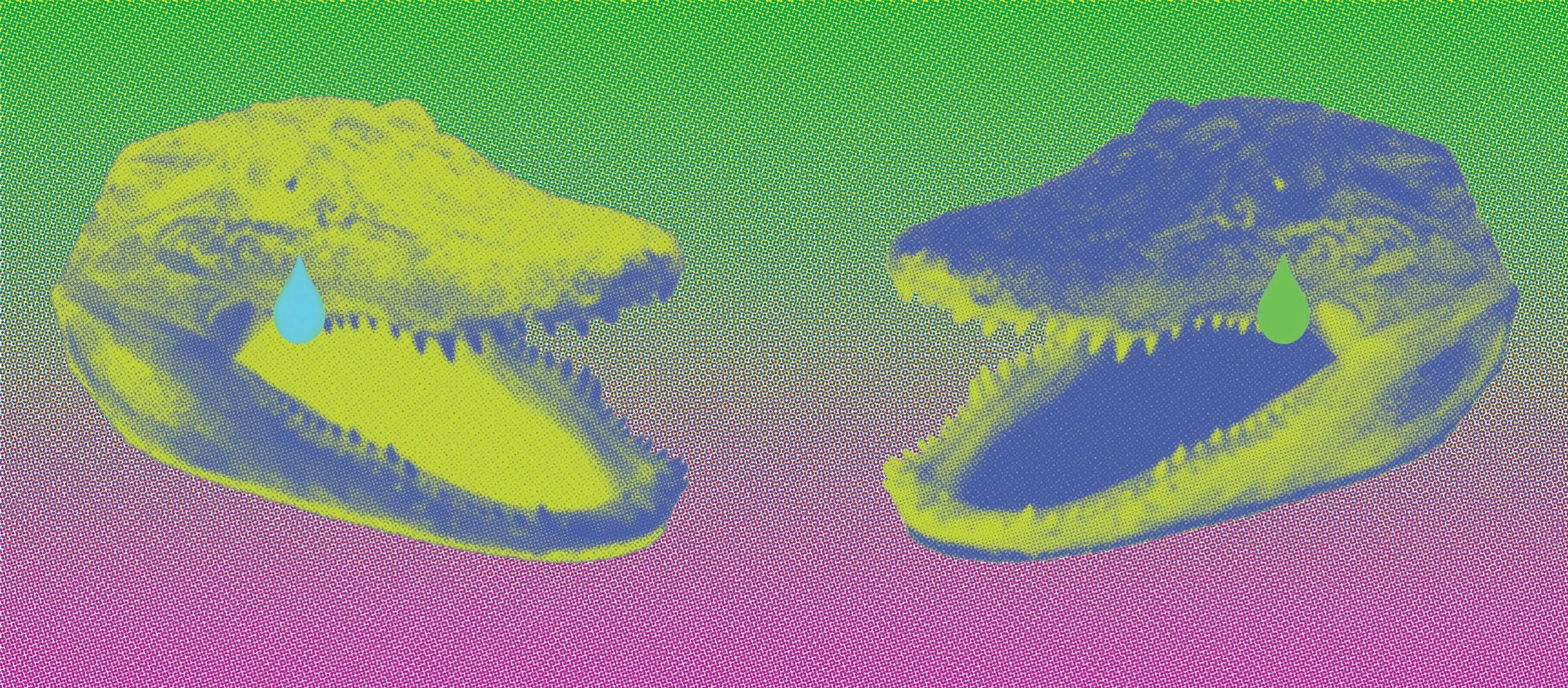 ccrocodile tearss (@ccrocodiletearss) Cover Image