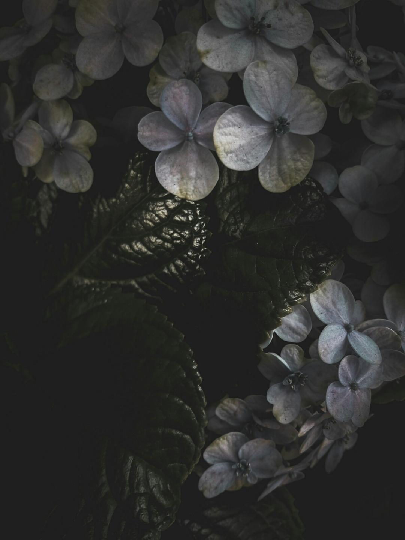 Hector Eduardo Prado Lima (@bytopo) Cover Image
