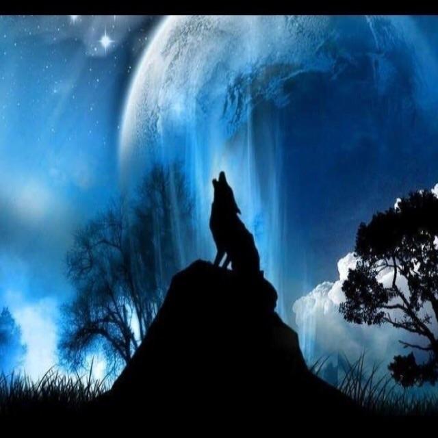 @phatwolfe1ocothebeast Cover Image