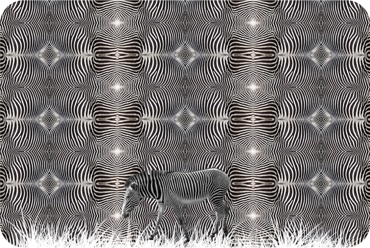 Zini (@matteozini) Cover Image