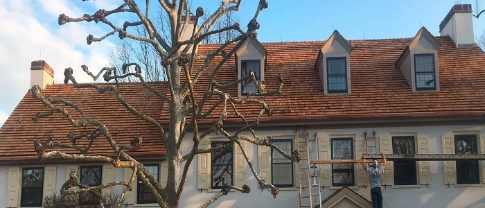 Roof Replacement and Repair (@roofingshingles) Cover Image