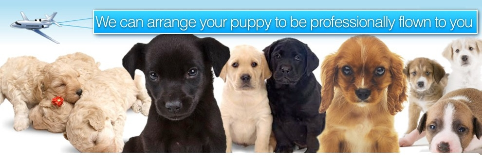 Puppy palace (@puppypalace) Cover Image