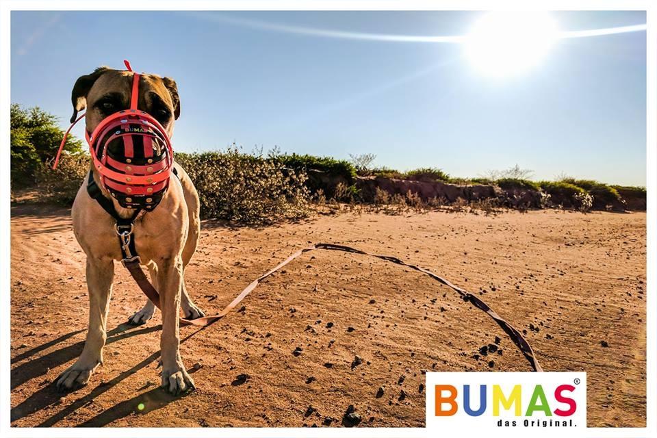 bumasuk (@bumasuk) Cover Image