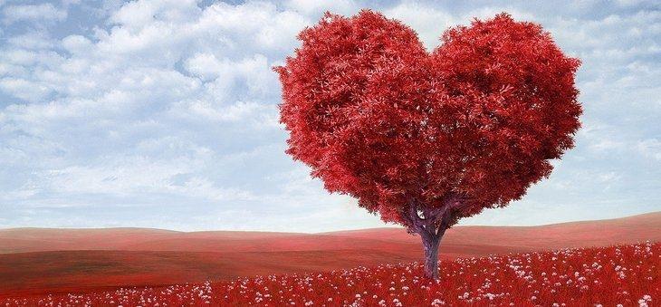 Fotos de Amor (@fotosdeamor) Cover Image