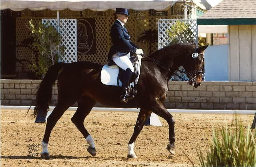 ShelleyBrowningDressage (@shelleybrowningdressage) Cover Image
