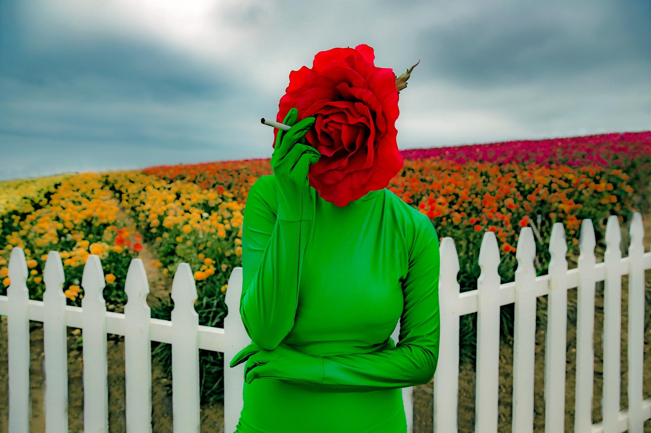 Melissa Cripe (@melissacripe) Cover Image