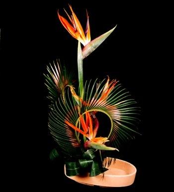 Fresh Flower India (@freshflowerindi) Cover Image