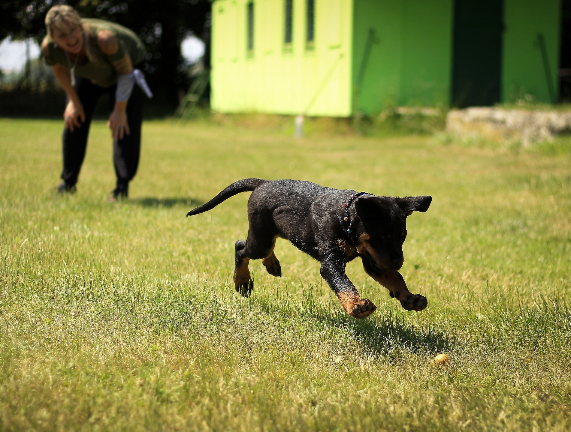 Texas Service Dogs (@texasservicedogs) Cover Image
