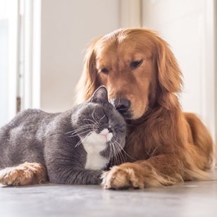 Furevercatsanddogs (@furevercatsanddogs) Cover Image