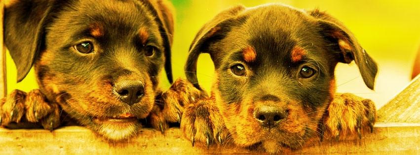 Carolina Pup Pets (@carolinapuppets95) Cover Image