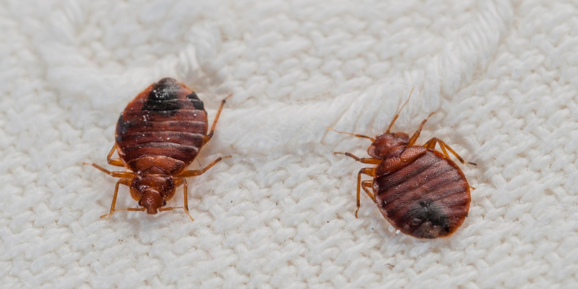 Bed Bug Exterminator (@bedbugremoval) Cover Image