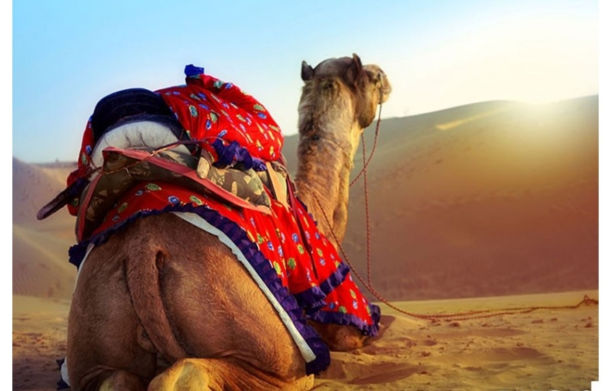 Rajasthan  (@rajasthantourpackages) Cover Image