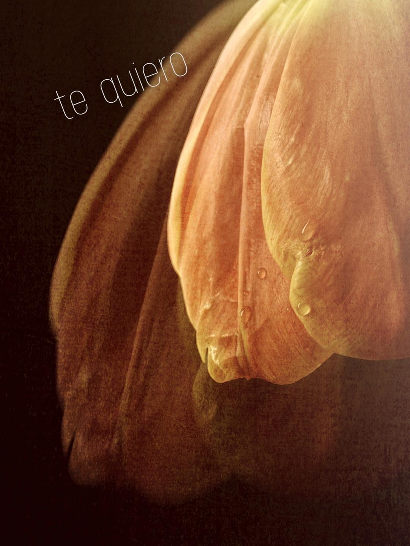 Raymonde de Carufel (@raymondedecarufel) Cover Image