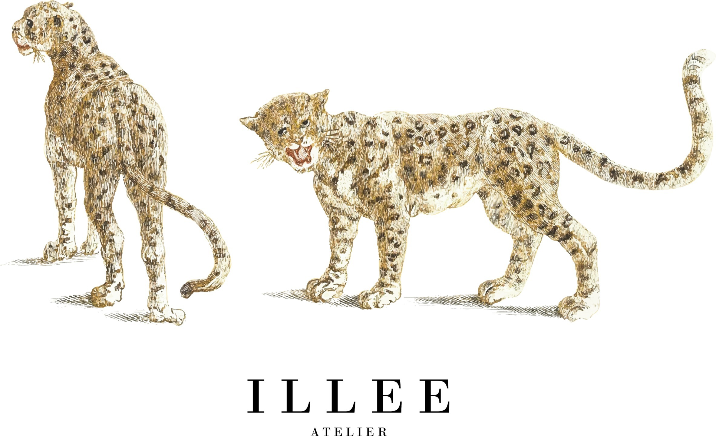 ILLEE (@illee) Cover Image