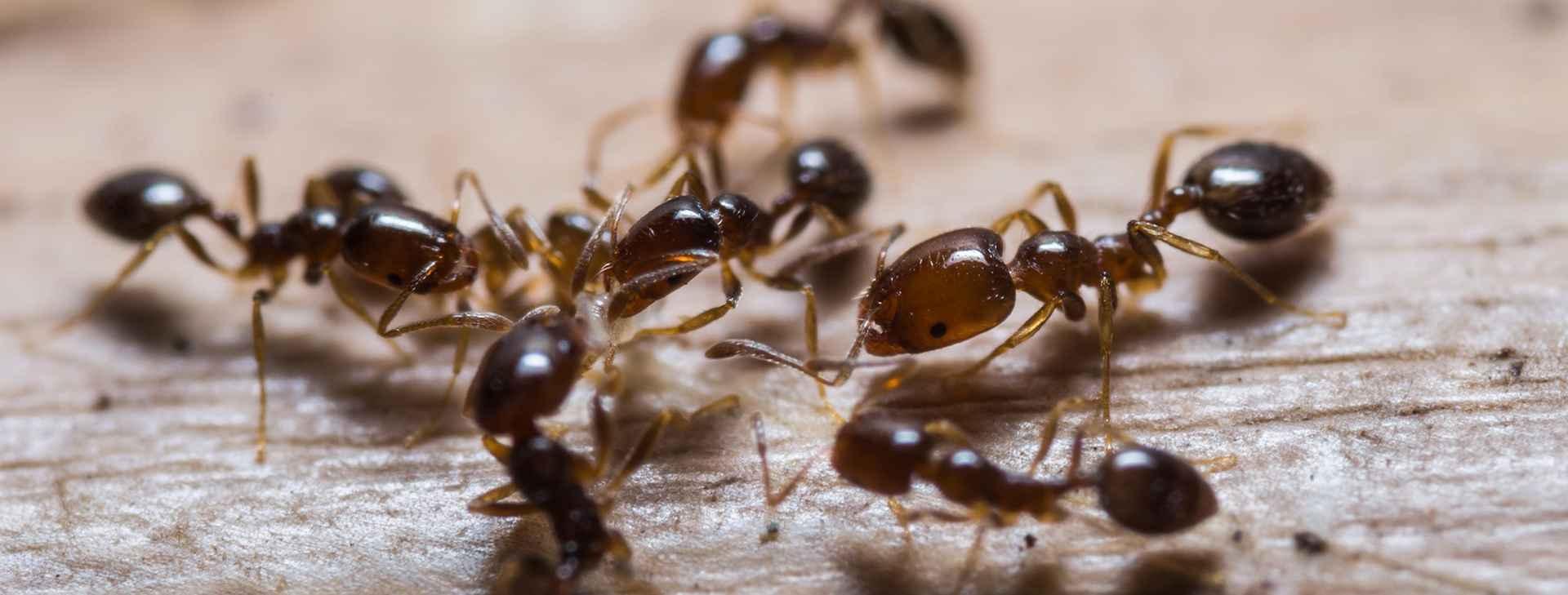 Master Pest Control Melbourne (@masterpestcontrol) Cover Image