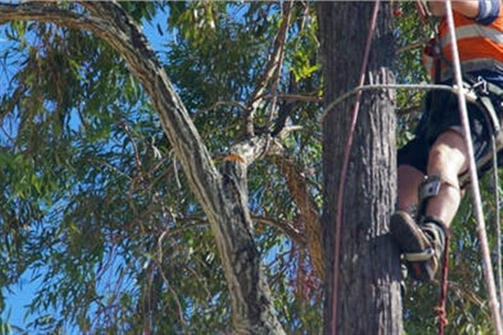 Tree Lopping Brisbane (@treeloppingbrisbaneqld) Cover Image