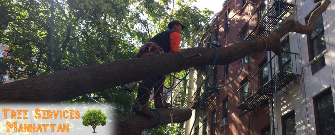Tree Services Manhattan (@treeservicesmanhattan) Cover Image