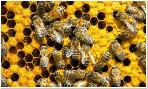 Bee Control Service Brisbane (@beecontrolservicebrisbane) Cover Image