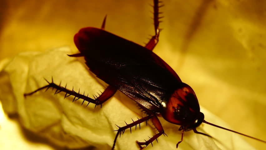 Pestend Pest Control Melbourne (@pestendpestcontrolmelbourne) Cover Image