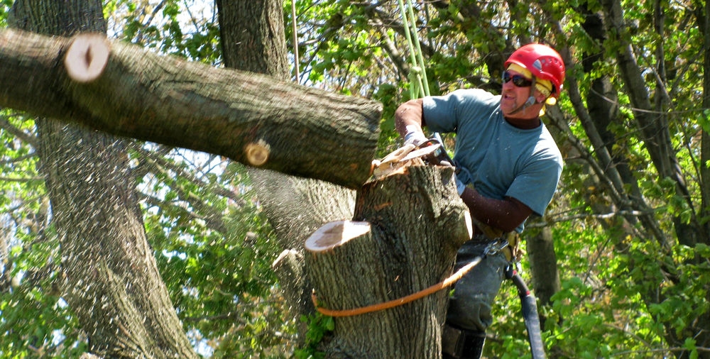 Thornton Creek Tree Service (@thorntoncreektreeservice) Cover Image