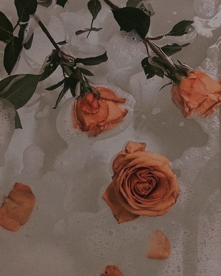𝒃𝒊𝒂; (@ohdxrlingz) Cover Image