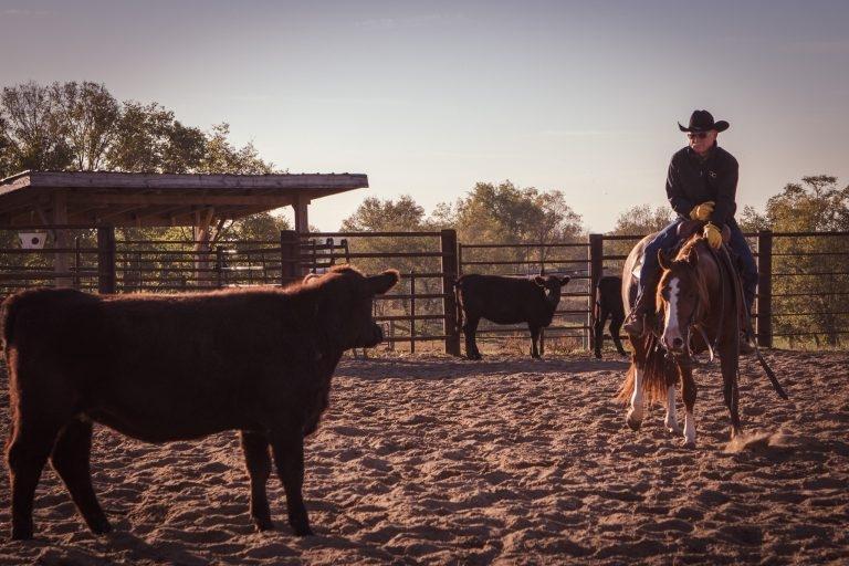 DCappel Horsemanship (@dcappelhorsemanship) Cover Image