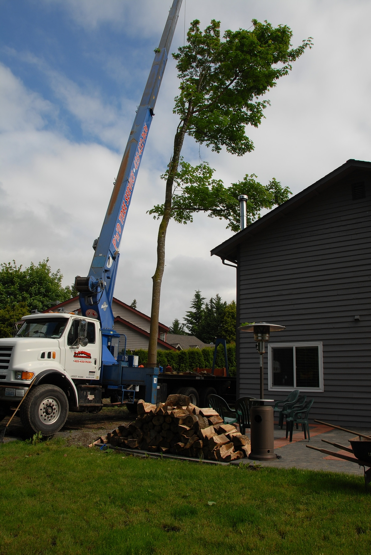 P'n'D Logging and Tree Service (@pndloggingwa) Cover Image