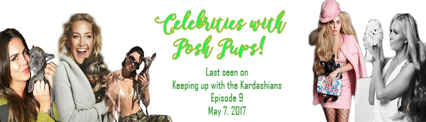 Posh Pocket Pups (@poshpocketpups) Cover Image