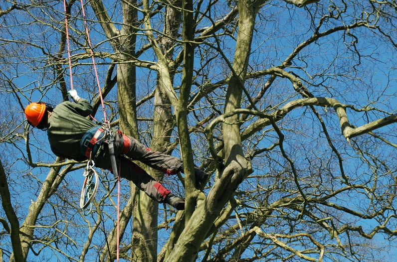 Alex Tree and Garden Services (@alextreeservice) Cover Image