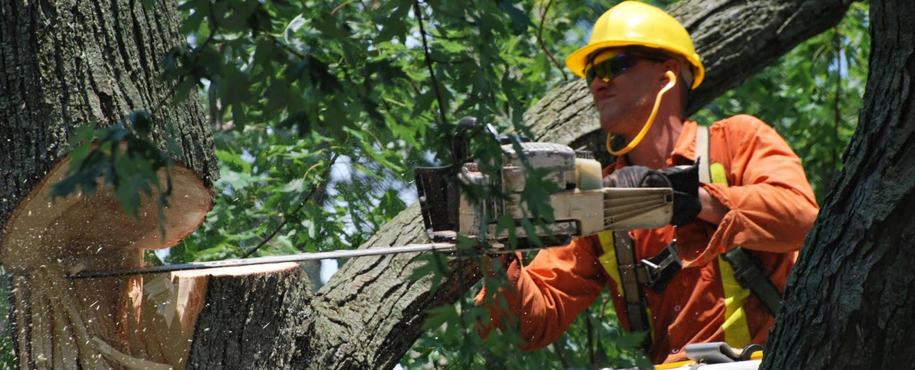 Sam's Tree Services North Shore (@samstree) Cover Image