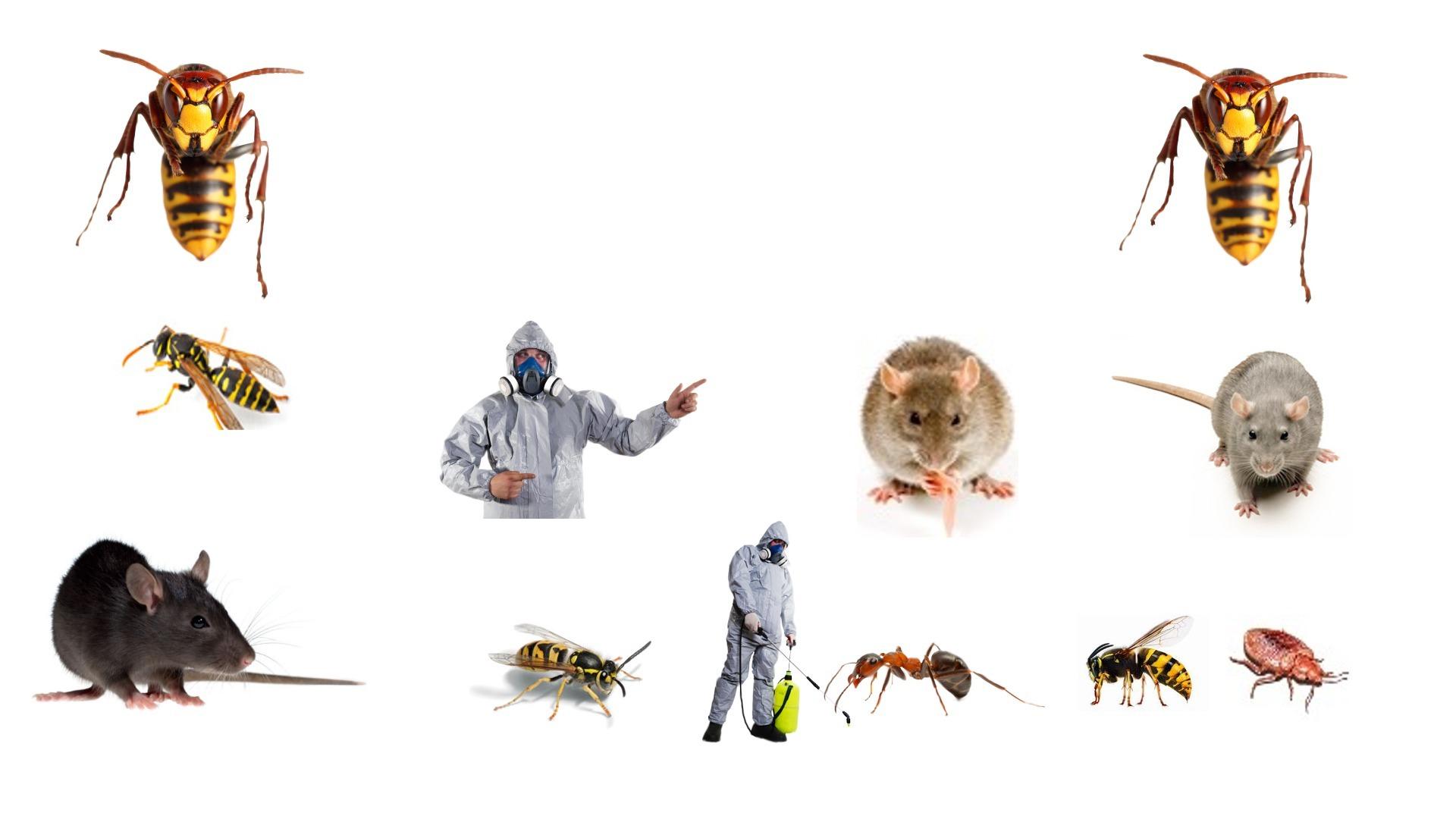 Termite Inspection Surfers Paradise (@pestcontrolsurfersparadise) Cover Image