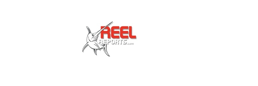 reelreports.com (@reelreports) Cover Image