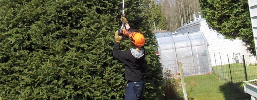 Tree Removal Mississauga (@treeremoval) Cover Image