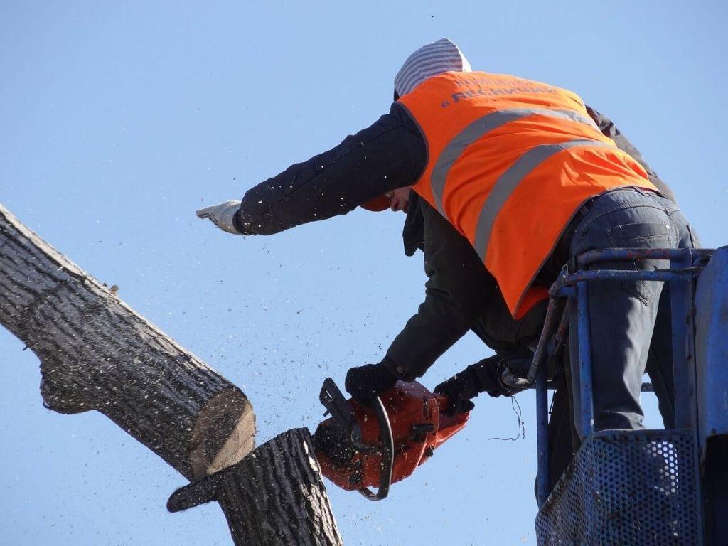 Tree Removal Mobile Al (@treeremovalmobileal) Cover Image
