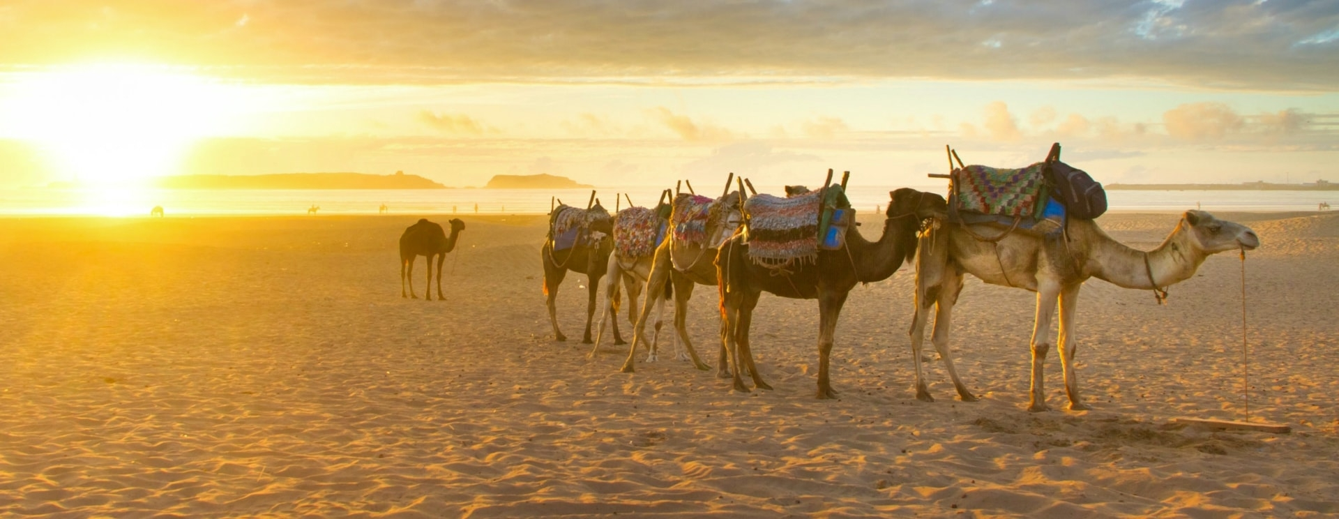 Marrakech Sahara Tour (@marrakechsaharatour) Cover Image