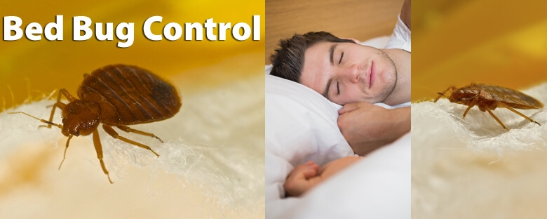 Bedbugs Control Perth (@bedbugscontrolperth) Cover Image