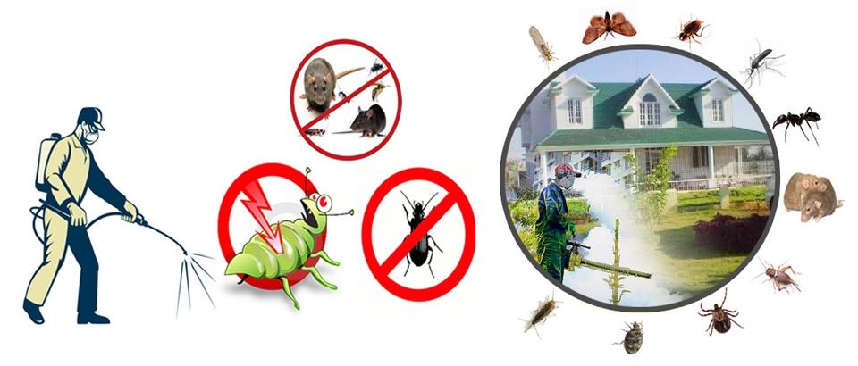 Pest Control Wynnum (@pestcontrolwynnum) Cover Image