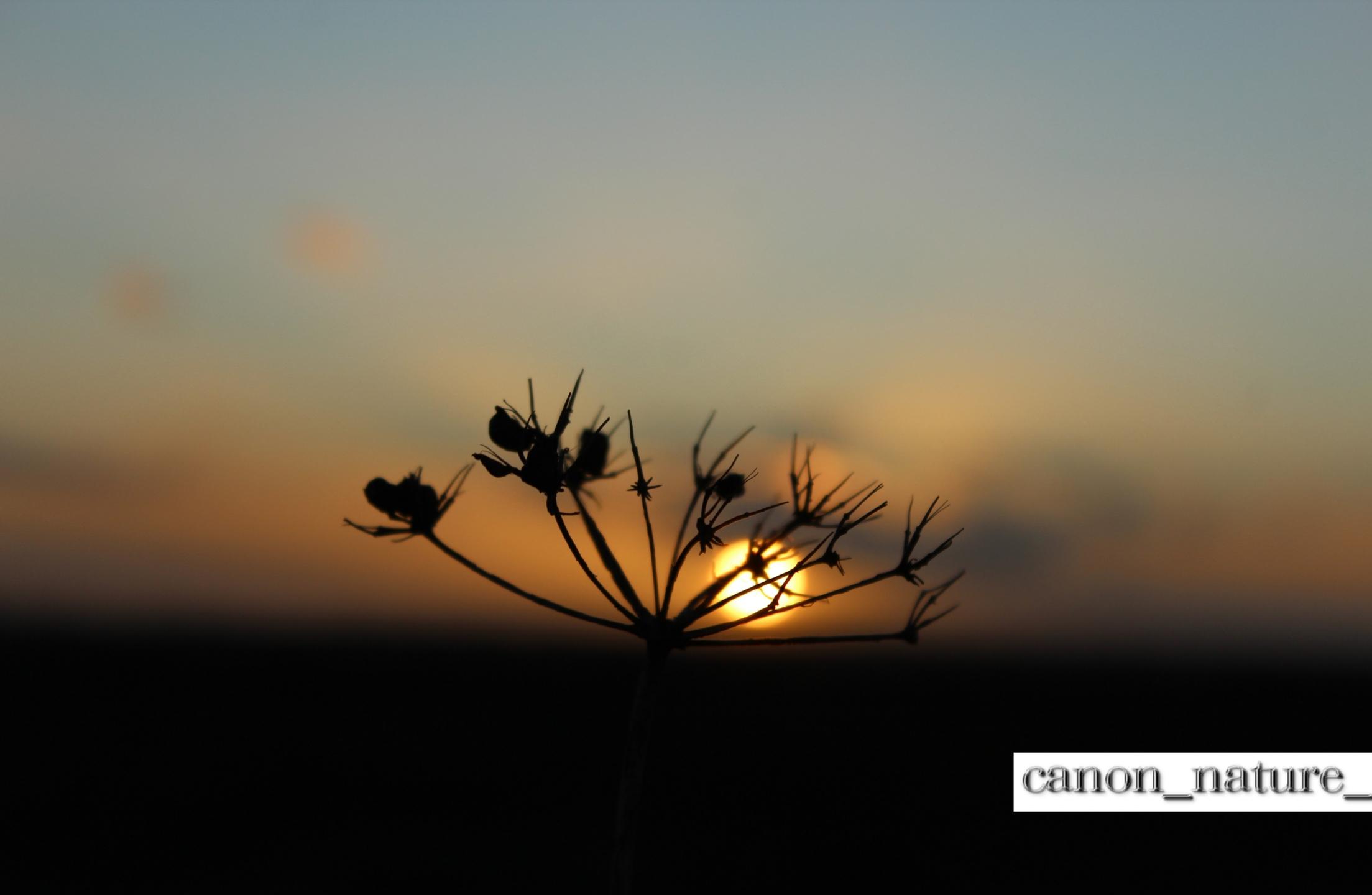 canon_nature_ (@canon_nature_) Cover Image
