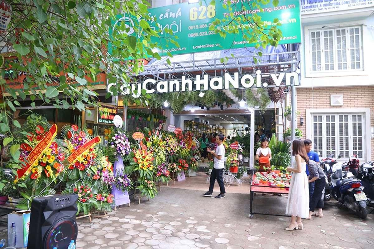 Cây Cảnh Hà Nội (@caycanhhanoi) Cover Image