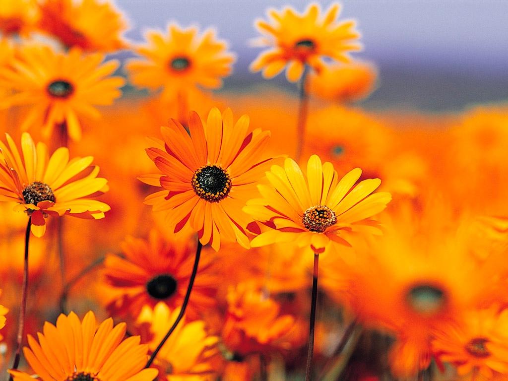 hixej89547@qmrbe.com (@hixej89547) Cover Image
