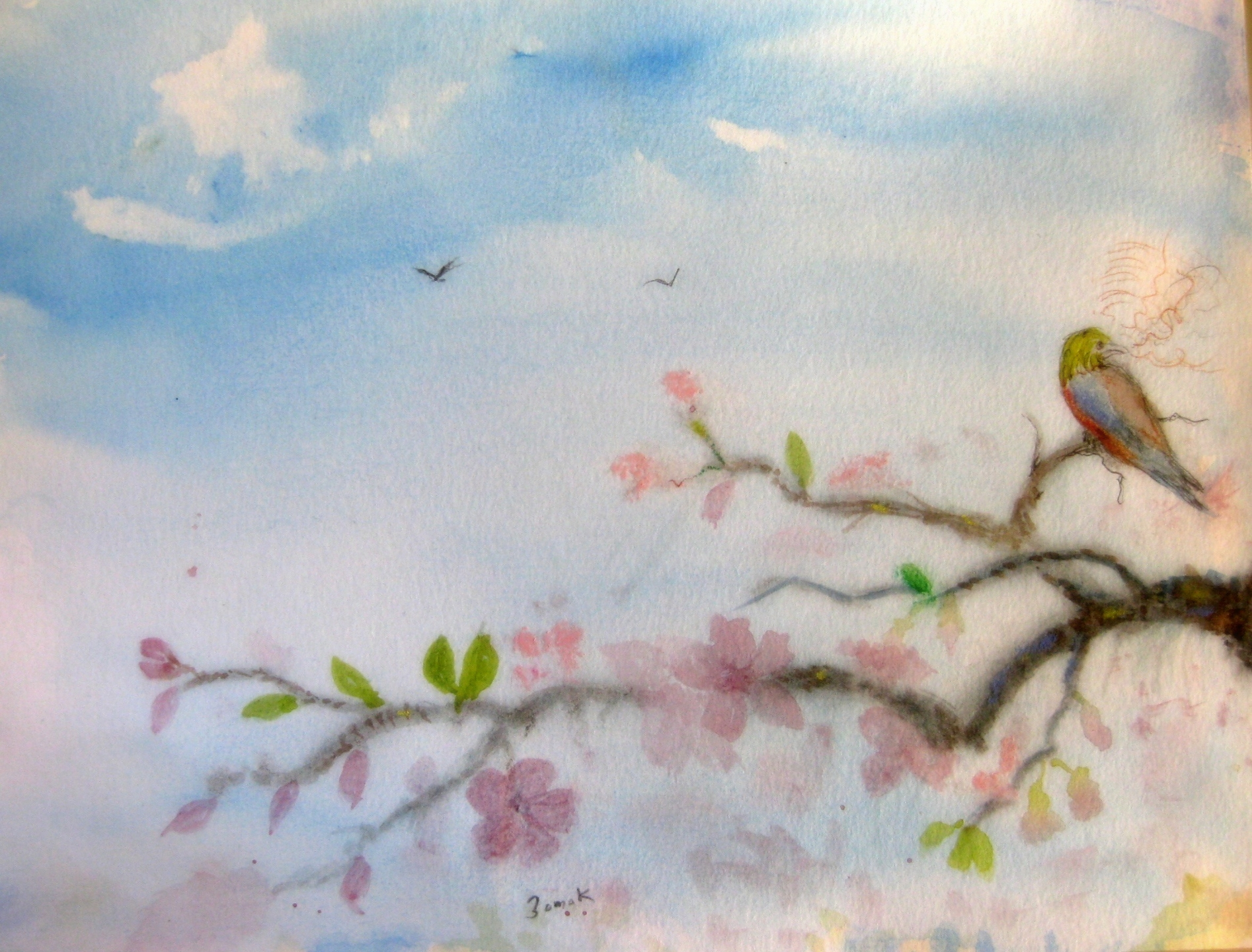 Painted Bunting with blossoms (@stevezomok) Cover Image