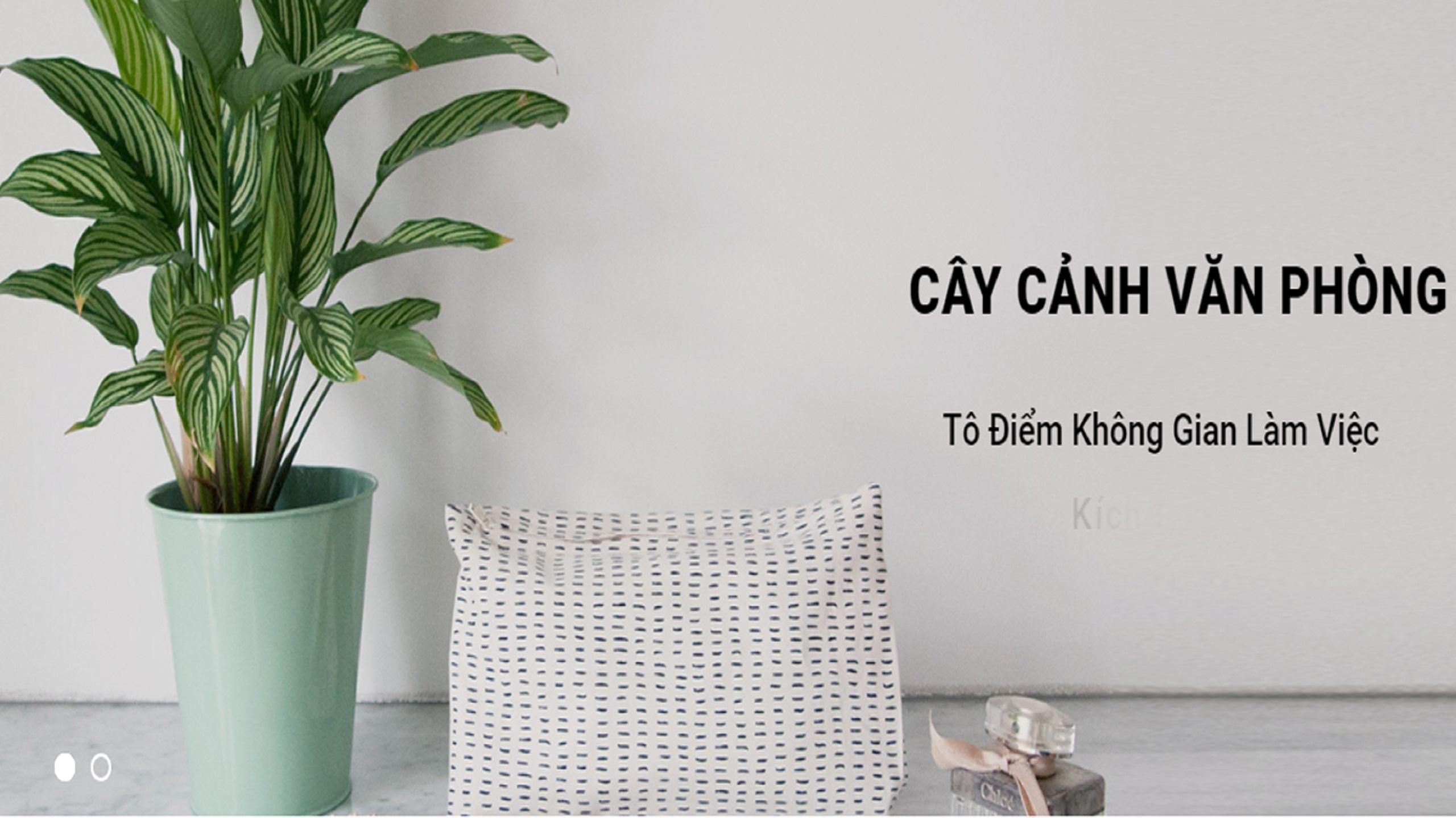 Thế Giới Cây Việt (@thegioicayviet) Cover Image