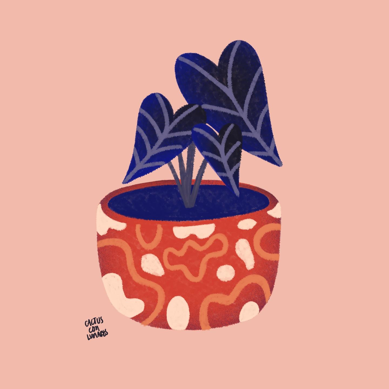 Paola López (@cactusconlunares) Cover Image