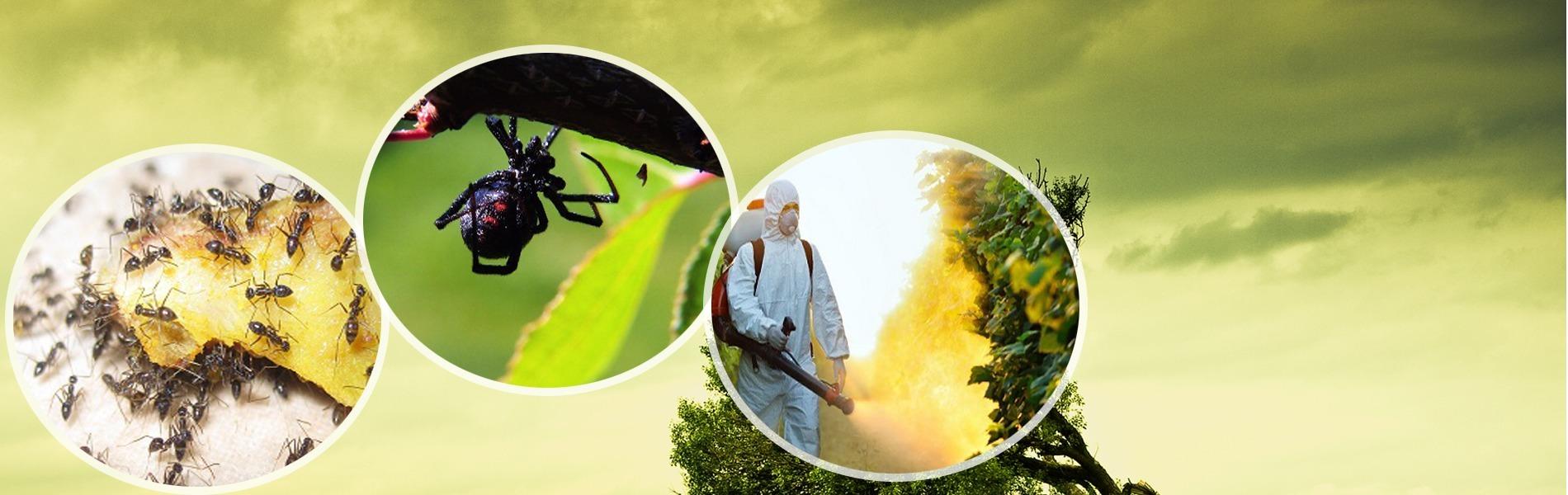 Eco Safe Pest Control Perth (@ecosafepestcontrolperth) Cover Image